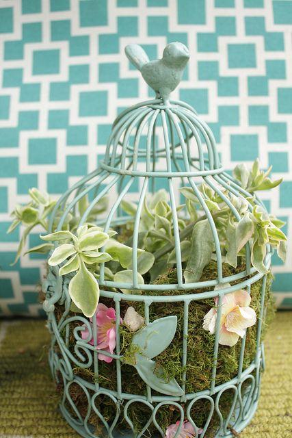 Birdcage as succulent planter.  Cute