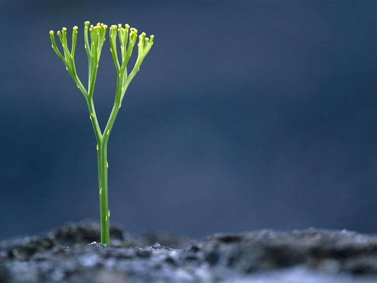 Photo: A fern growing from cooled lava