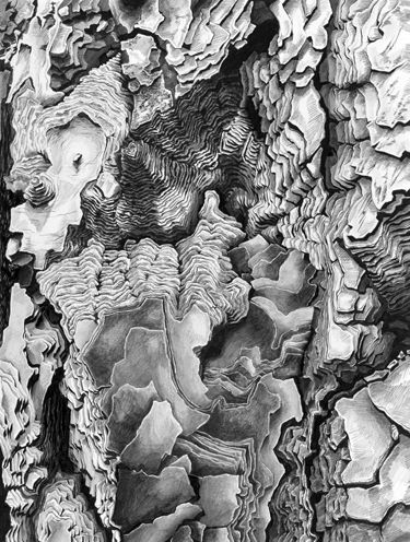 Kate Atkin, drawing. I love the contoured look, which gives it more scale and adds a third dimension to it.