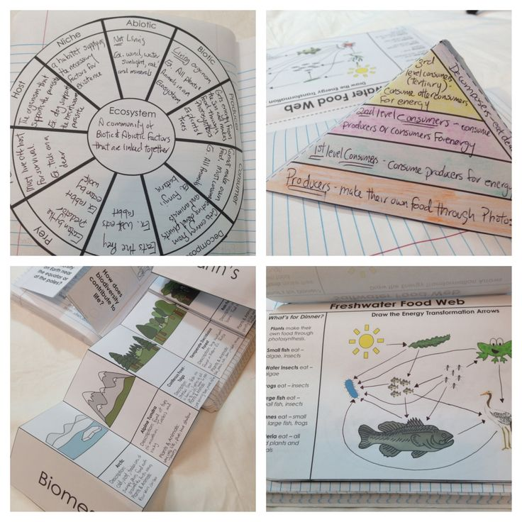 Ecosystems Interactive Notebook pages - abiotic, biotic, biodiversity, food chains, food webs, energy pyramid, predator/prey, consumer/producer, parasite/host, biomes, human impact on ecosystems, Charles Darwin, natural selection and more.