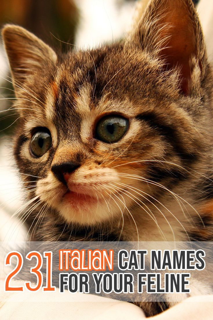 Awesome Italian names for yo… | Cat Names  Cat Name  Cat