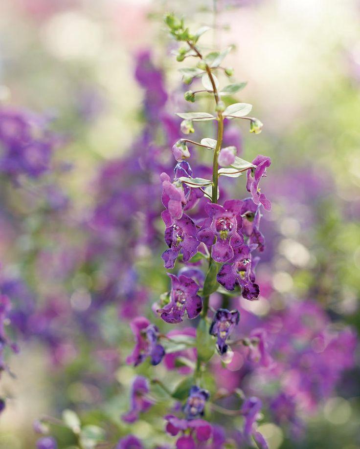318 Best Florida Zone 9 Gardening Images On Pinterest
