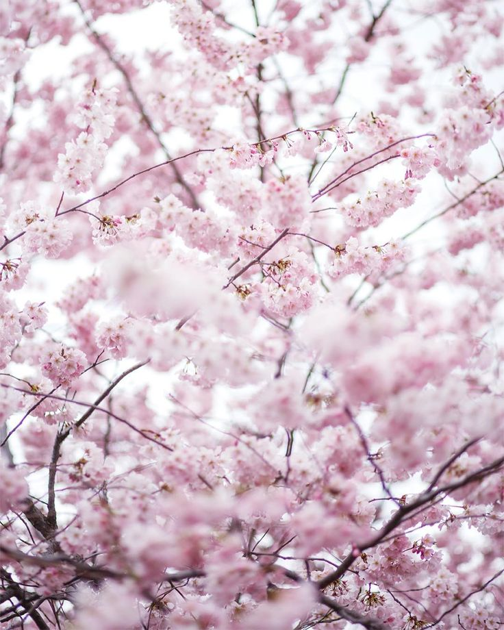 Ya sé que había dicho que mi estación favorita era otoño e invierno pero eso era porque no había visto aún la primavera en Viena!!! ☺️