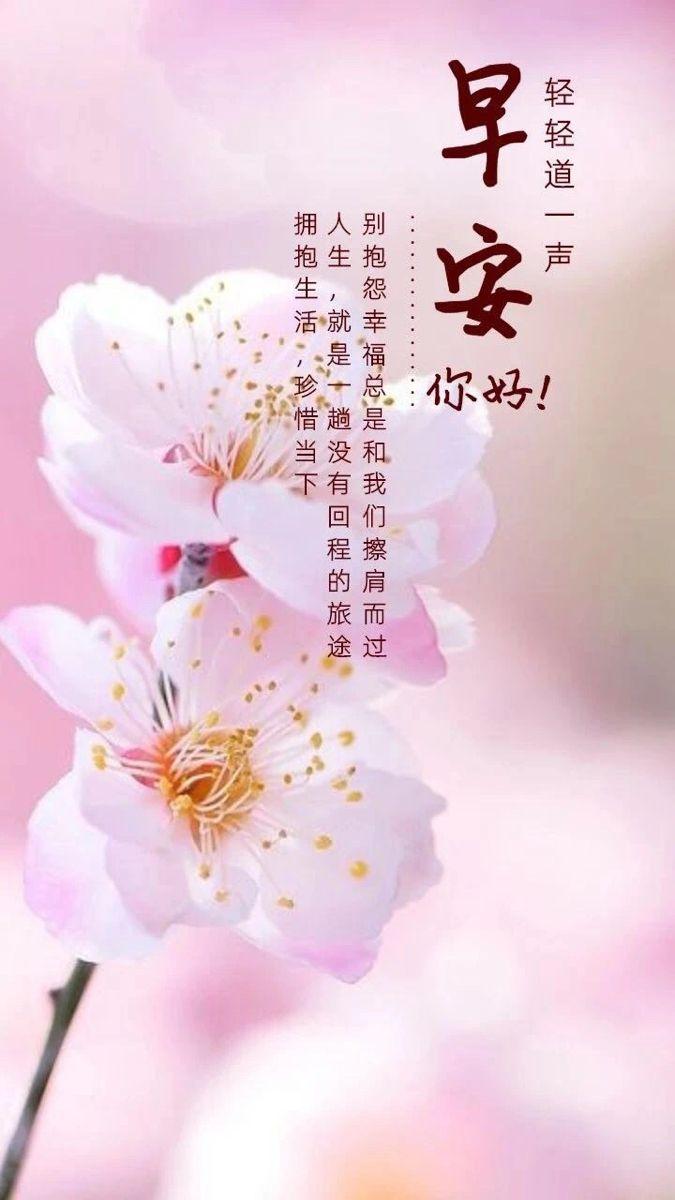 pin by li shu zhang on 早安心語正能量圖片 good morning greetings morning greeting chinese quotes