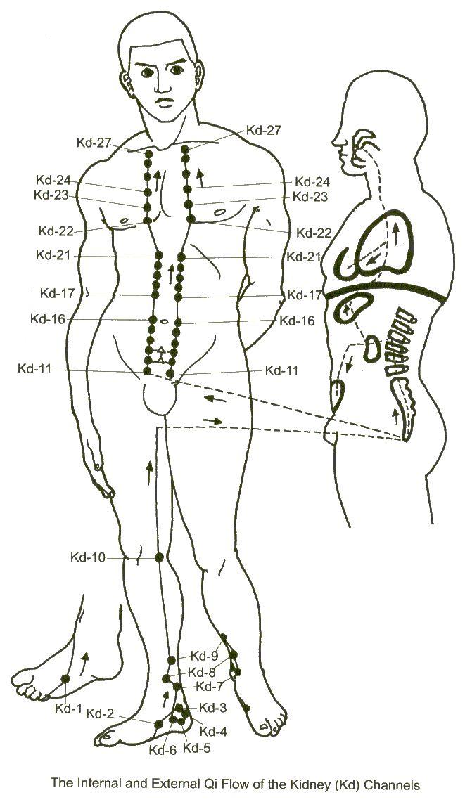 méridien des REINS _ heure de ointe : 17-19h _ organe associé : vessie