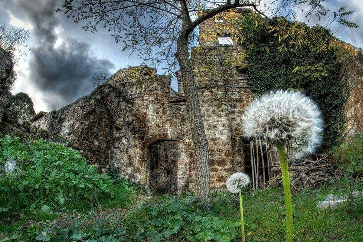 #Dandelion #Celleno #ruins #abandoned Città perduta di Celleno antica #Viterbo #soffione #Nikon #Samyang #8mm #fisheye #RiccardoCuppini