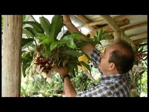 Cultivando orquídeas Parte 4: La iluminación - YouTube