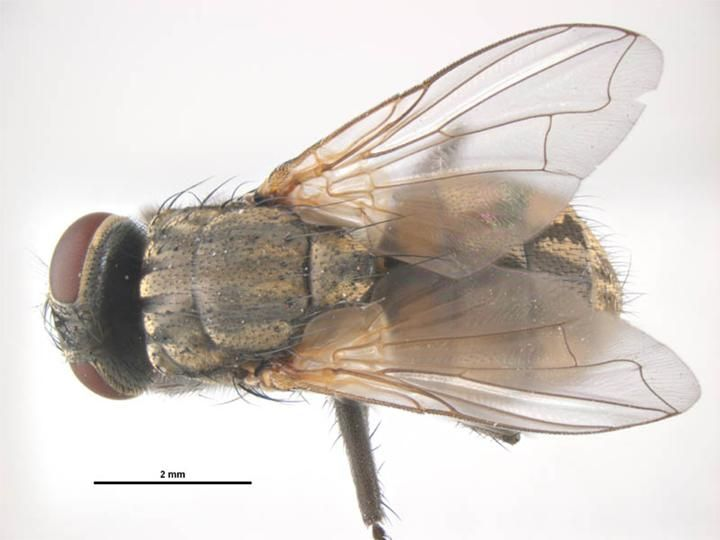 The 25 best Fly images on Pinterest | Anatomy, Anatomy reference and ...
