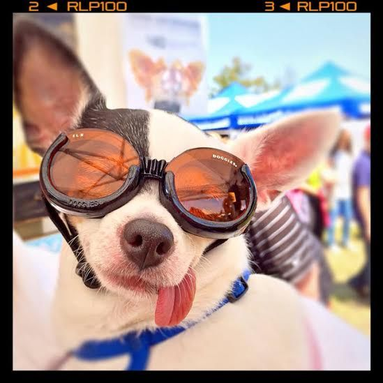 #ruckusdog #ruckusdogcrew #sharyncathcart