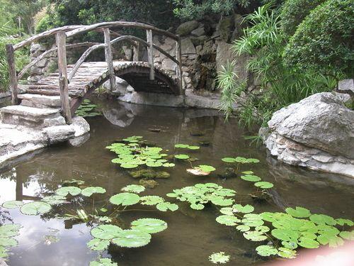 Bridge at the Japanese Garden in Zilker Botanical Park, Austin, Texas.: Austintx, Parks Botanical, Parks Austin, Austin Texas, Botanical Parks, Japanese Gardens, Families Photos, Botanical Gardens Jpg 500 375, Japan Gardens