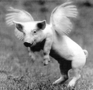 """Rare flying pig breed from Kazachstan. """"WHAT ARE YOU STARING AT? I AM THE PRODUCT OF A MIXED MARRIAGE!"""" RP BY HAMMERSCHMID"""