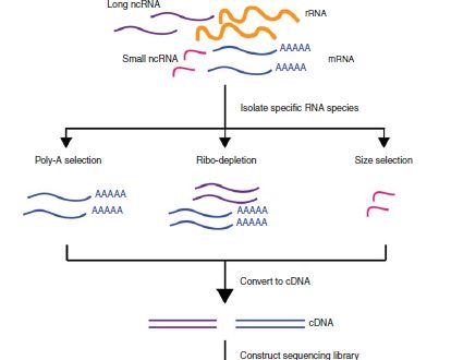 Introduction to RNA Sequencing and Analysis | RNA-Seq Blog