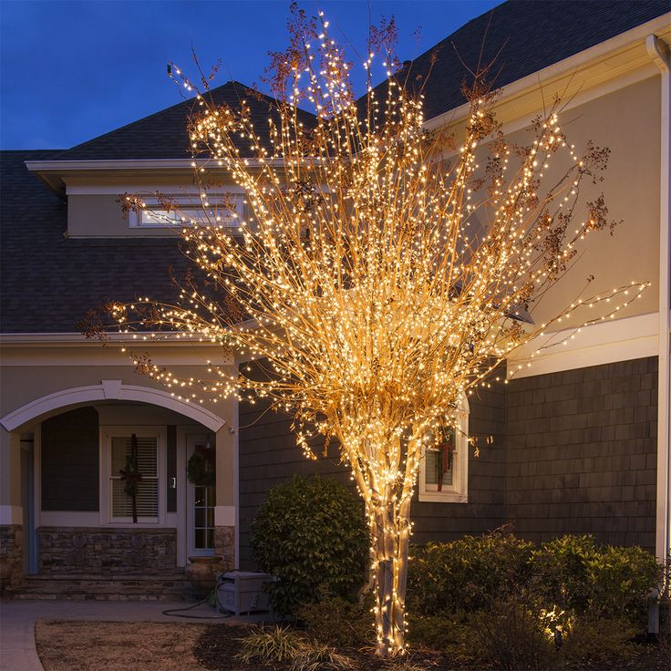 Tree Wrapped with White Christmas Lights