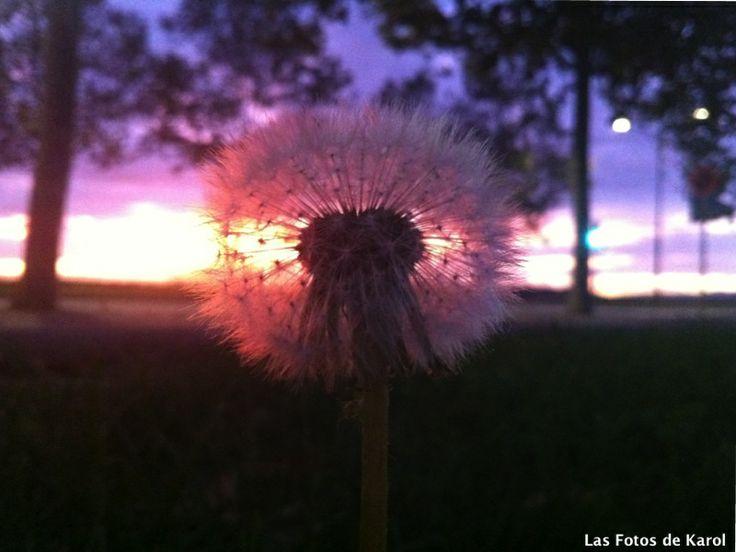 #Anochecer #lila #ponpon #bosque