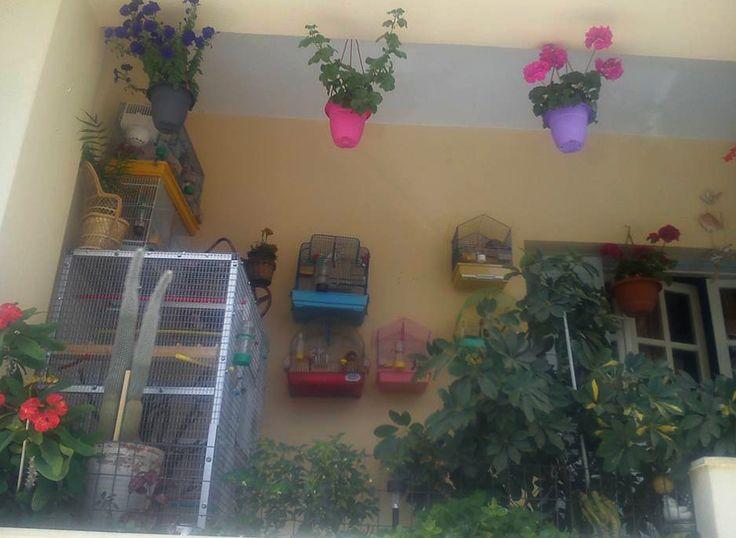 Ανοιξιάτικο τοπίο με συνοδεία το κελάηδημα των πουλιών… λες και βρίσκεσαι στην εξοχή - κι ας αντικρίζεις ένα μπαλκόνι γεμάτο χρώματα κι αρώματα στο κέντρο της πόλης…