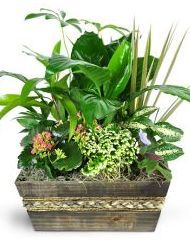 https://www.phpbb.com/community/memberlist.php?mode=viewprofile&u=1693306  Best Place To Buy Plants Online Get The Facts,  The 5 Ideal Buy Trees Online YouTube Videos. The Easiest Ways to earn the very best of House Plants To buy.