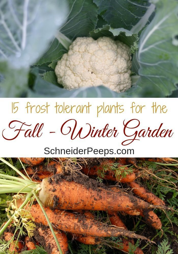 15 frost tolerant plants for the fall and winter vegetable garden - Plants & Gardens