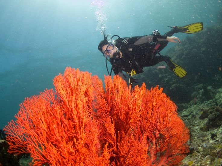 Scuba diving in the Philipines  http://www.rafiquaisraelexpress.com/scuba-diving-in-the-philippines/