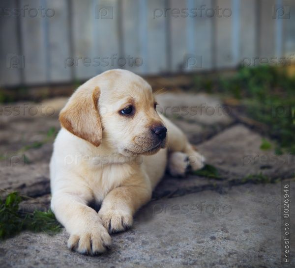 PressFoto | Фотографии на тему мир животных, фото животных