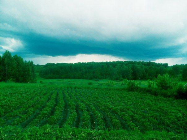 Природа…💧  #лес #трава #небо #облака #картошка Подробнее на https://vk.com/wall-148270444_309