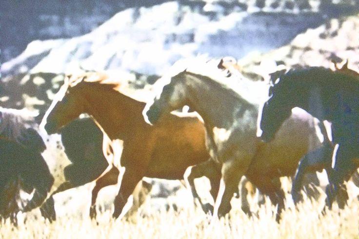 Day 12 Photo of horses running