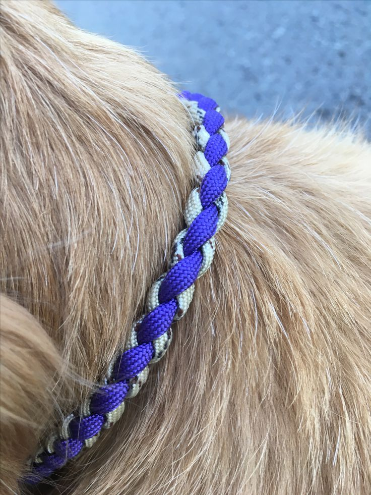 www.u-Dog.de/Shop Handgefertigtes Halsband ganz nach deinem Geschmack. Hergestellt nach deinen Wünschen! Paracord Halsband für den Hund. Australien Shepherd,Labrador, golden retriever, Bulldogge, Terrier