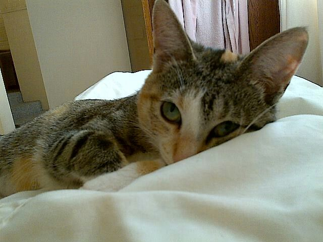 My rescue kitty Annie...I've never owned a more loveable cat...♥