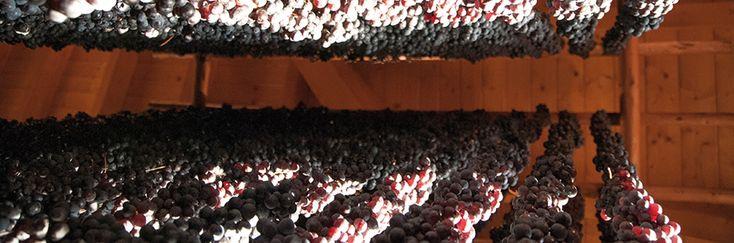 Amarone della Valpolicella è un vino dal colore rosso carico tendente eventualmente al granato con I'invecchiamento. Uno dei vini più pregiati del territorio veronese, con origine antichissima.