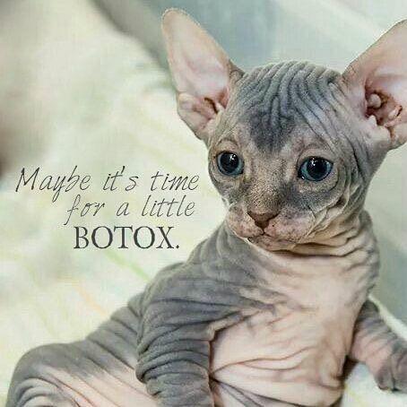 Acho que eu vi um gatinho... precisando de botox!  #xôruguinhas #botox #toxinabotulinica #beleza #estetica #dermatolovers #humor #bomdia