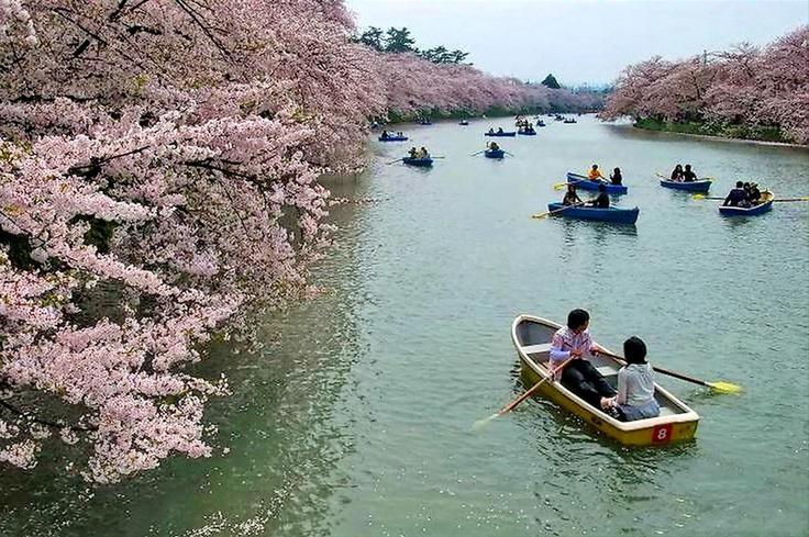 Blossoming cherry riverside, Japan