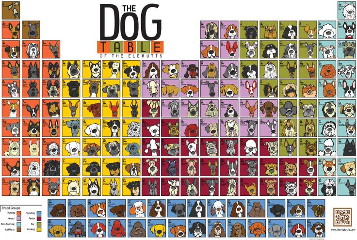The Dog Table of the Elemutts by thedogtable.com #Illustration #Dog_Table #thedogtable