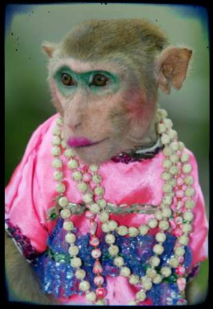 female monkey in bridal style one cool dude pinterest funny
