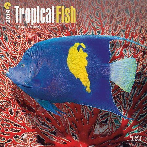 28 best images about kleurige vissen on