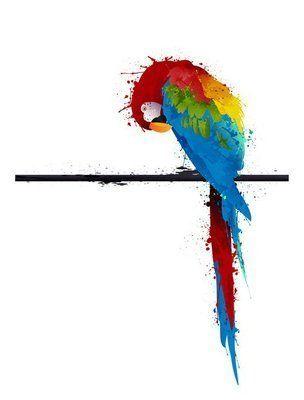 Naklejka na Ścianę Wektor papuga papuga, graffiti
