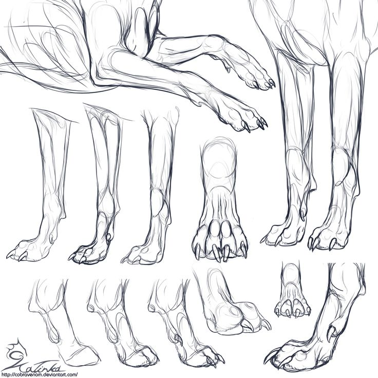 Canine forepaws ✤ || CHARACTER DESIGN REFERENCES | Find more at https://www.facebook.com/CharacterDesignReferences