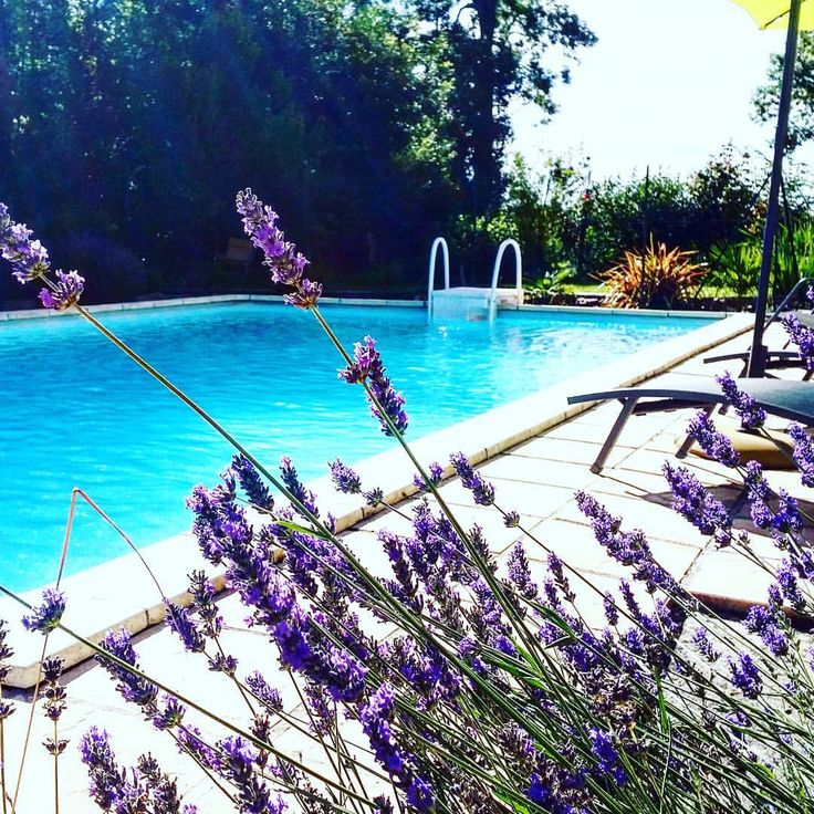 #srilankan #jardin #lafontenellechambresdhotes # #cognaclife #bnb ##charente #chambresdhotes #chambresdhotesdecharme #france #garden #gardning #backyard #summer#sunset #sunny #countryside #southoffrance #swim #swimmingpool (à La Fontenelle chambre...