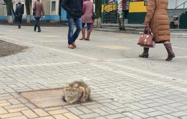 cat-hachiko