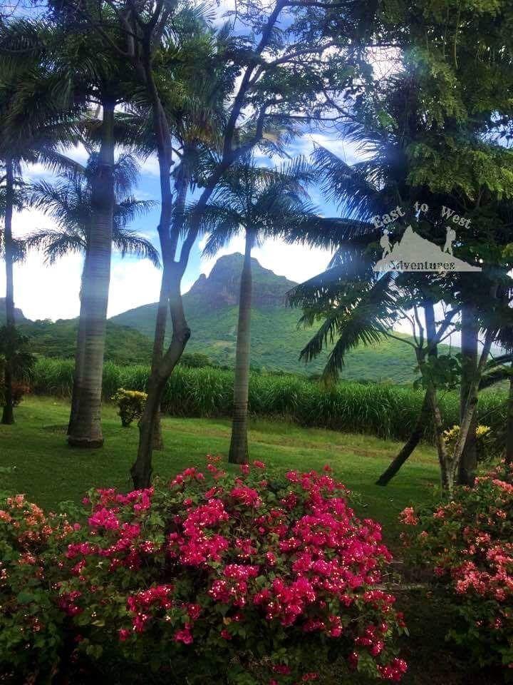 Mauritius wild beauty 🌺🌲🌳الموريشوس الحياة البرية والطبيعة الخلابة  http://www.easttowestadventures.com/en/5-best-tropical-island-indian-ocean/ If you need any help planning it within your budget send us a message  #easttowestadventures #travelblogger  #travelphotographer  #honeymoon #beach #beachholiday  #africa #blogger #paradise #bestbeaches #whitesands #blue #mauritius #caselanaturepark