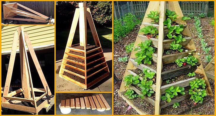 Cum să cultivi căpsuni în balconul casei sau în propria curte