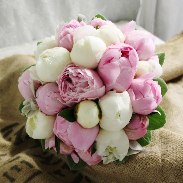 Perlegården: Peonbrudebukett Hvite og rosa Peoner. Lammeører,...