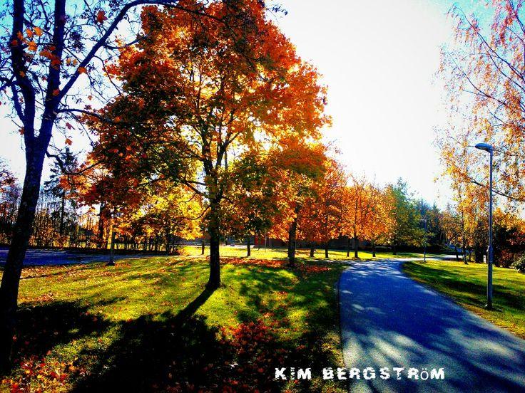 En bild tagen från förra hösten.