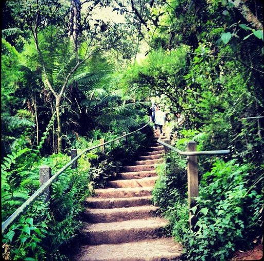 The infamous 1,000 steps - The 'Kokoda Trail' - Upper Ferntree Gully, Victoria, Australia.  A real fitness test!