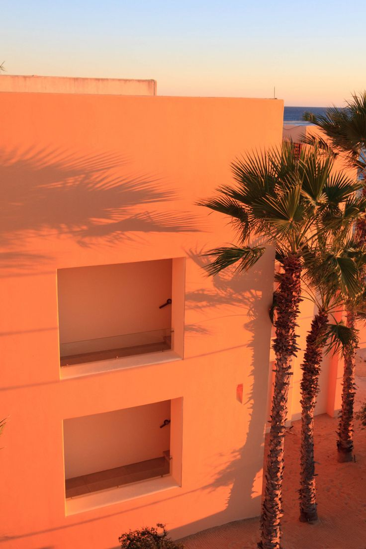such pretty color light! love this photo with the orange light and palm trees