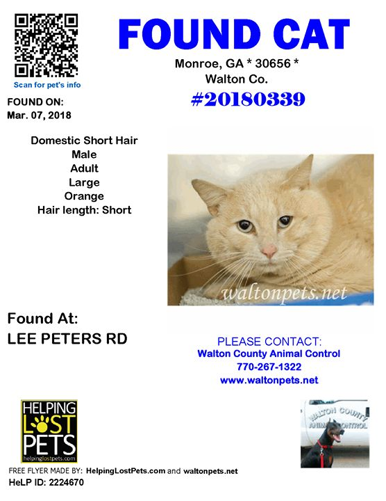 #FOUNDCAT #Shelter ID: #20180339 #Monroe (LEE PETERS RD)  #GA 30656 #Walton Co.  #Cat 03-07-2018! Male #Domestic Short Hair Orange/Turned in stray 3/7/18; owner unknown. Blue camo collar. Hold expires 3/10/18. No pending applications or rescue inquiries.  CONTACT wcanimal@co.walton.ga.us          Phone: (770) 267-1322  More Info Photos and to Contact: http://ift.tt/2oRI8dN  To see this pets location on the HelpingLostPets Map: http://ift.tt/2tqfnd8  Let's get this cat home! #HelpingLostPets