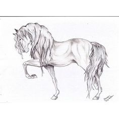 drawings of horses - Google Search