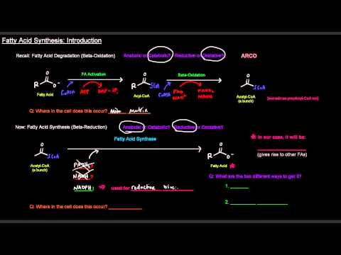 Fatty Acid Synthesis (Part 1 of 12) - Introduction