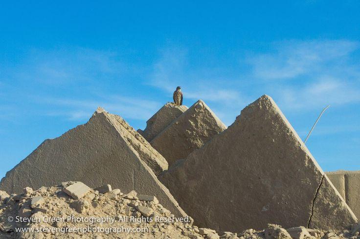 Perched Steppe Eagle