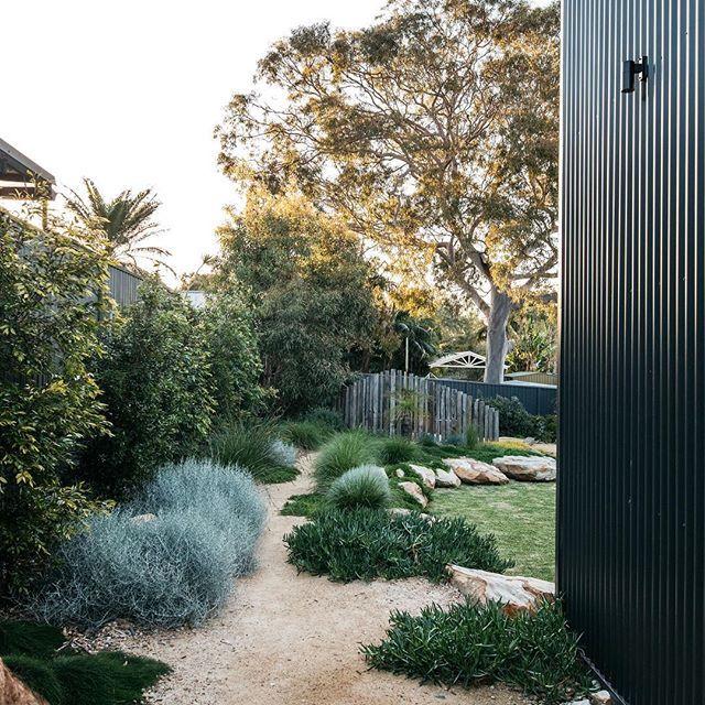 A Simply Beautiful Contemporary Australian Native Garden