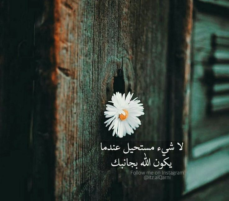 المصراوية - صفحة 91 Aa4b0c39e18dde5d103805d20d02f9b8