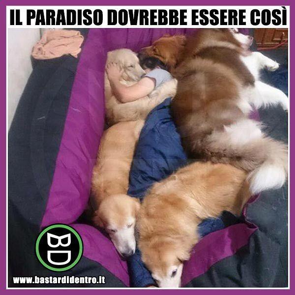 Qual è il #paradiso per te? Tagga i tuoi amici e condividi le risate! #bastardidentro #cani www.bastardidentro.it